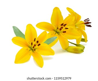 Yellow flower isolated images stock photos vectors shutterstock beautiful lily flowers on white mightylinksfo