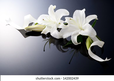 beautiful lily on black background