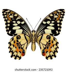 Beautiful Lime Butterfly lower wing profile isolate on white background.(Papilo demoles)