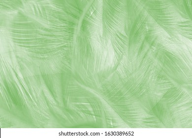 Beautiful lime green color trends feather texture pattern pastel background