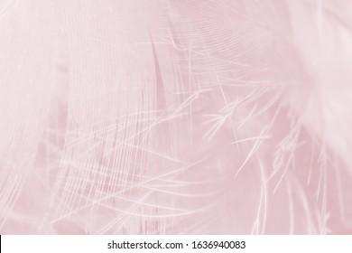 Beautiful lines violet - mauve mist colors tone feather texture background, trends color