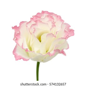 Beautiful Lisianthus flower isolated on white background