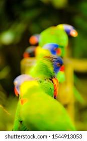 Beautiful little birds of Guadeloupe