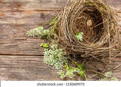beautiful little bird's nest on wooden background