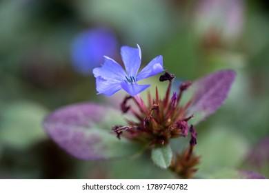 Beautiful little blue flower background