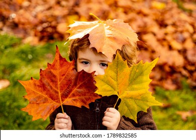 Beautiful little boy enjoy autumn nature has happy face. Child portrait - Shutterstock ID 1789832585
