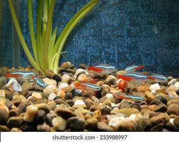 beautiful little fish in an aquarium