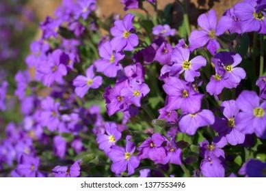 beautiful little flowers in spring