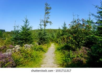 Beautiful little footpath in Scottish coniferous forest