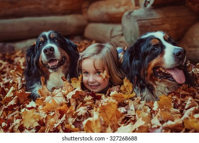 Beautiful little girl with her dogs in autumn forest. Bernese Mountain Dog
