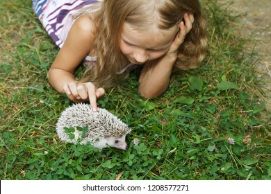 beautiful little girl with her pet African pygmy hedgehog