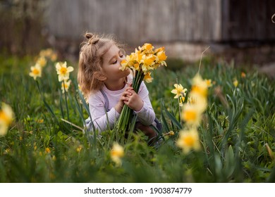 Beautiful little girl picks a bouquet of daffodils in the garden. Funny child toddler sniffs flowers. Spring mood green lawn in a country house. Happy fun childhood freedom. Little gardener florist