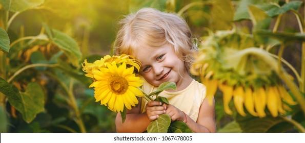 beautiful little girl in sunflowers