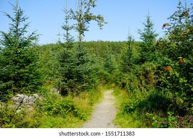 Beautiful little path in Scottish coniferous forest