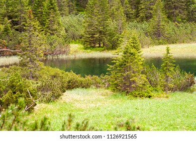 A beautiful little pond with clean water. Water in the lake reflecting green. Around full of grass and trees during the spring season