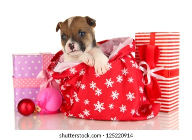 Beautiful little puppy in New Year bag isolated on white