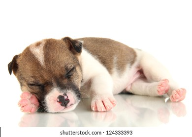 Beautiful little puppy sleeping isolated on white