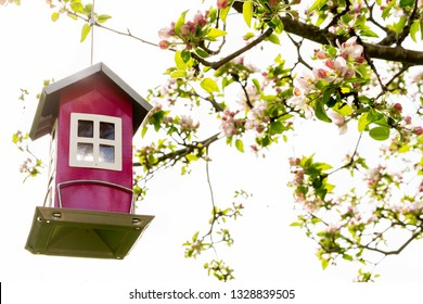 Beautiful little red bird feeder house hanging in a blooming blossom  apple tree with bright sky.