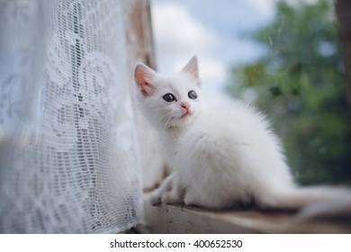 beautiful little white kitten on a window sill