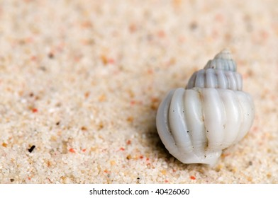a beautiful little white sea shell in the sand