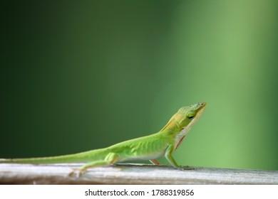 beautiful-lizard-crawling-along-piece-26