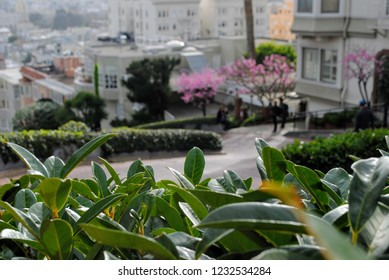 Beautiful Lombard Street in San Francisco