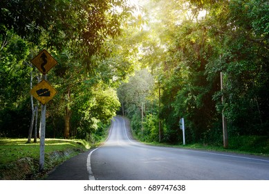Beautiful Long Roadway into the Mountain to Journey and Travel in the Forest