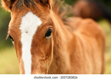 a beautiful look from a foal