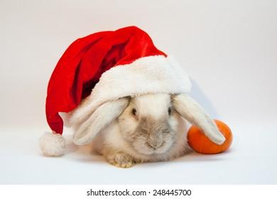 Beautiful lop-eared rabbit in Santa Claus hat