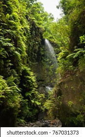The beautiful Los Tilos laurel forest and waterfall at the island of La Palma.