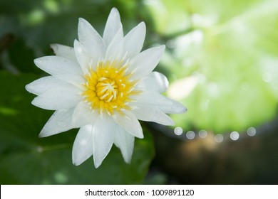 The beautiful of a lotus flower.