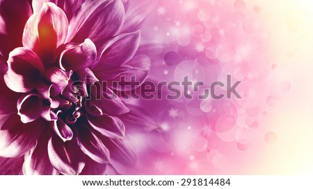 Beautiful lotus flower abstract floral backgrounds stock photo edit beautiful lotus flower abstract floral backgrounds with beauty bokeh mightylinksfo