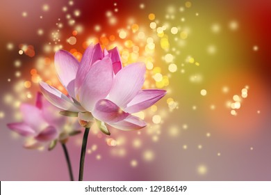 Beautiful lotus flower colorful background