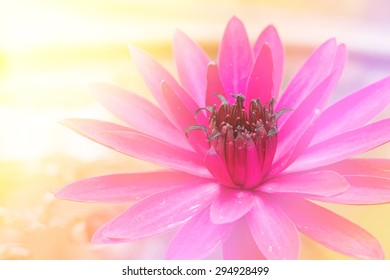 Beautiful. Lotus flowers with Soft Focus Color Filtered background