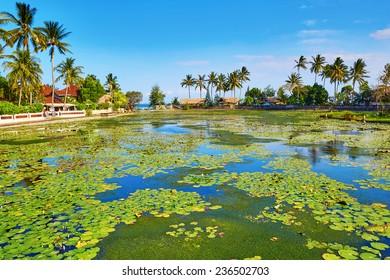 Beautiful lotus lagoon in Candidasa, Bali, Indonesia