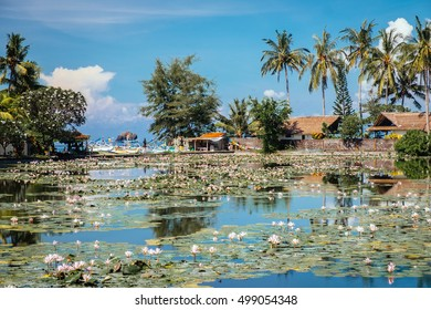 Beautiful Lotus Lagoon pond surrounded by tropical palm trees in Candidasa village, Bali. Travel to Indonesia, Asia. Lake village garden. Tropical lake village near lotus pond. Lotus garden village