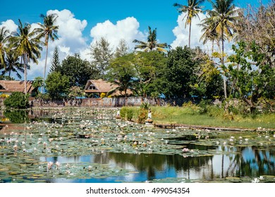 Beautiful Lotus Lagoon pond surrounded by tropical palm trees in Candidasa village, Bali. Travel to Indonesia, Asia. Lake village. Tropical lake village near lotus pond. Village view in Bali island