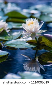 Beautiful lotus reflection on the pond