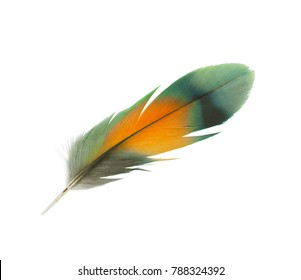 Beautiful lovebird feather isolated on white background