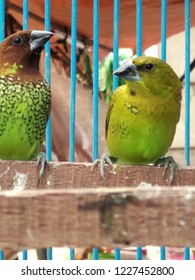 Beautiful lovebirds sit in the cage