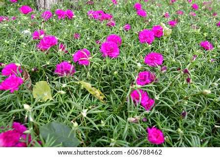 Beautiful lovely pink flowers stock photo edit now 606788462 beautiful and lovely pink flowers mightylinksfo