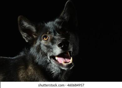 beautiful lowkey wolfshound