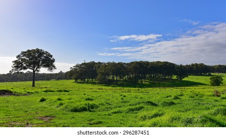 Beautiful lush field with trees against the clear sky