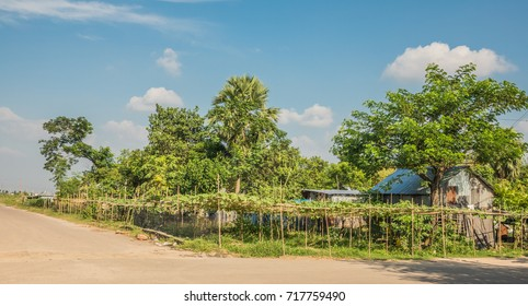 The beautiful lush green Bangladeshi landscape in summer with green foliage and trees