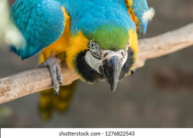 Beautiful Macaw bird sitting on a perch looking for attention from passers by