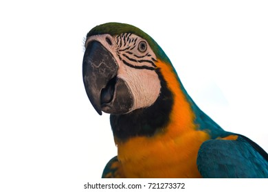 Beautiful Macaw Parrot isolated on white background