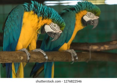 beautiful macaw parrots sitting on a perch looking for attention