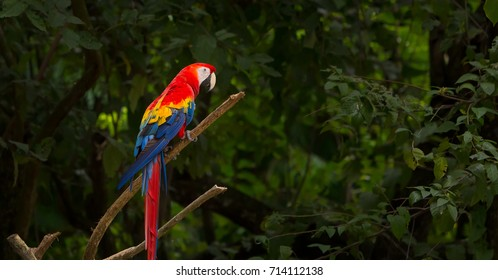 A beautiful macaw standing on a stick, in a guatemalan zoo