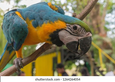 Beautiful macore and parrot bird in the zoo at Thailand.