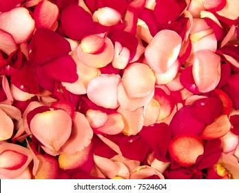 Beautiful macro close-up view of colorful rose petals pattern